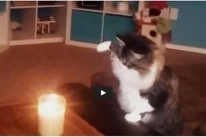 De kat bij kaarslicht