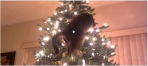 De kat uit de boom kijken