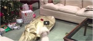 Kerstcadeau voor de hond