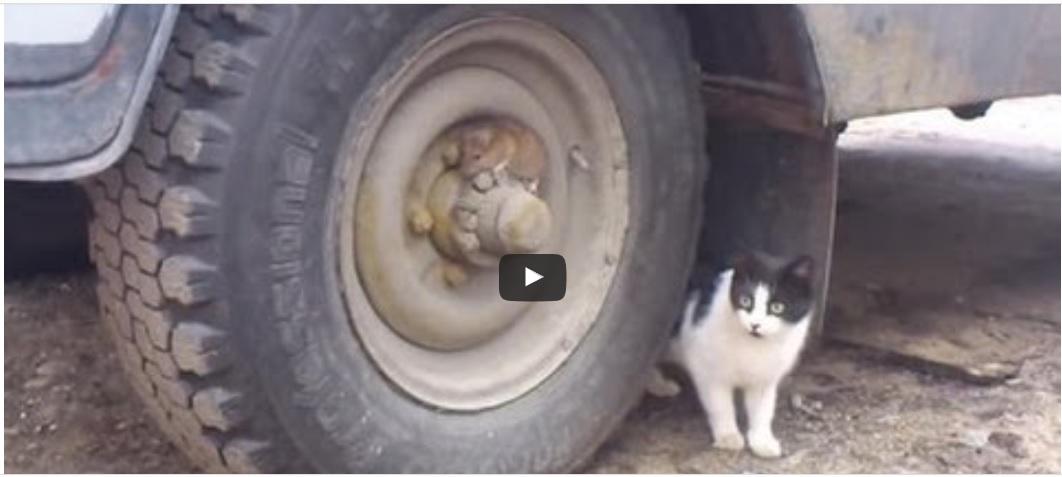 Tom en Jerry in het echt
