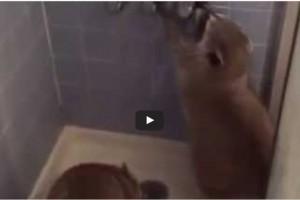 Wasbeer in de douche