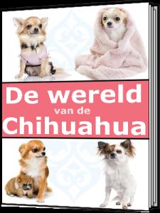 de wereld van een chihuahua