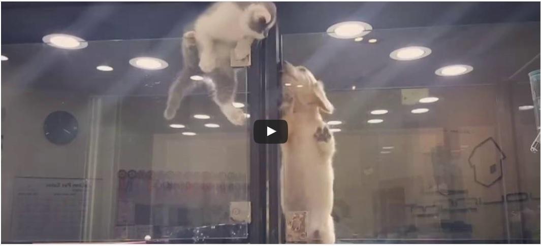kitten springt in een puppyhok