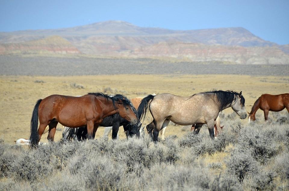 Mustang paard