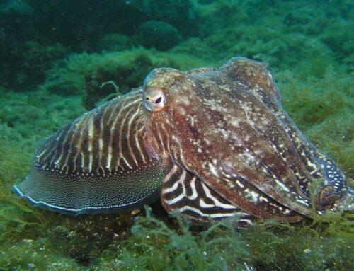 Informatie over de octopus